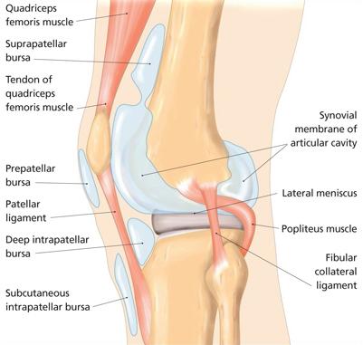 Prepatellar bursitis anatomy of the knee ccuart Gallery