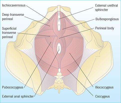 Anorectal examination in emergency departments