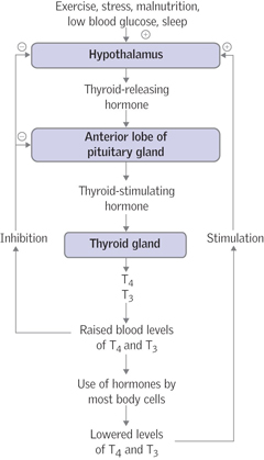 Assessment and management of patients with hypothyroidism