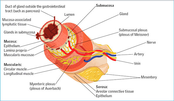 The digestive system: part 1
