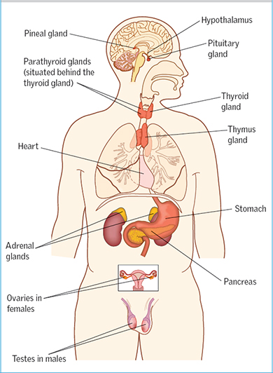 Endocrine system: part 1