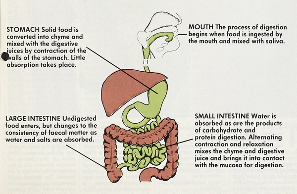 digestive juice secreted by stomach