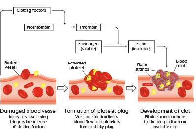 Principles and nursing management of anticoagulation