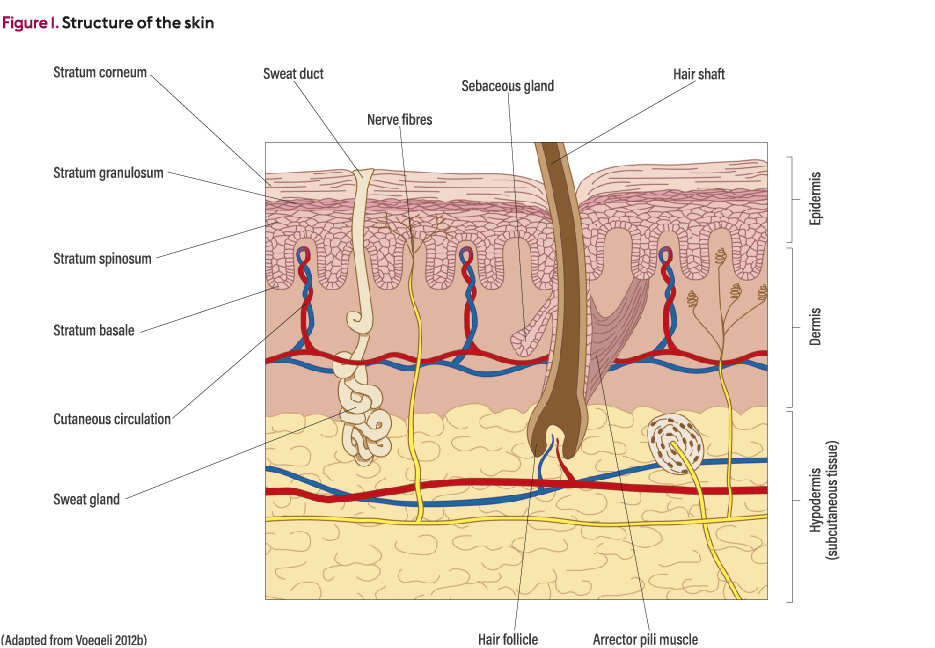 Prevention And Management Of Moisture Associated Skin Damage