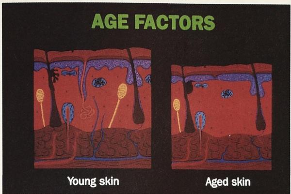 Factors influencing wound healing